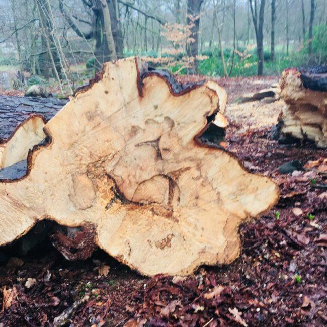 Vers gezaagde boom door Hout & Hamer